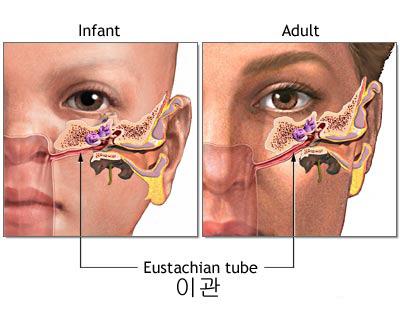 c0391ede_eustachian-tube.jpg